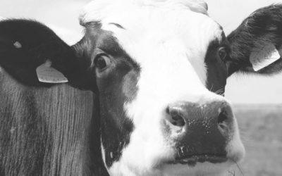 Verse of houdbare melk?